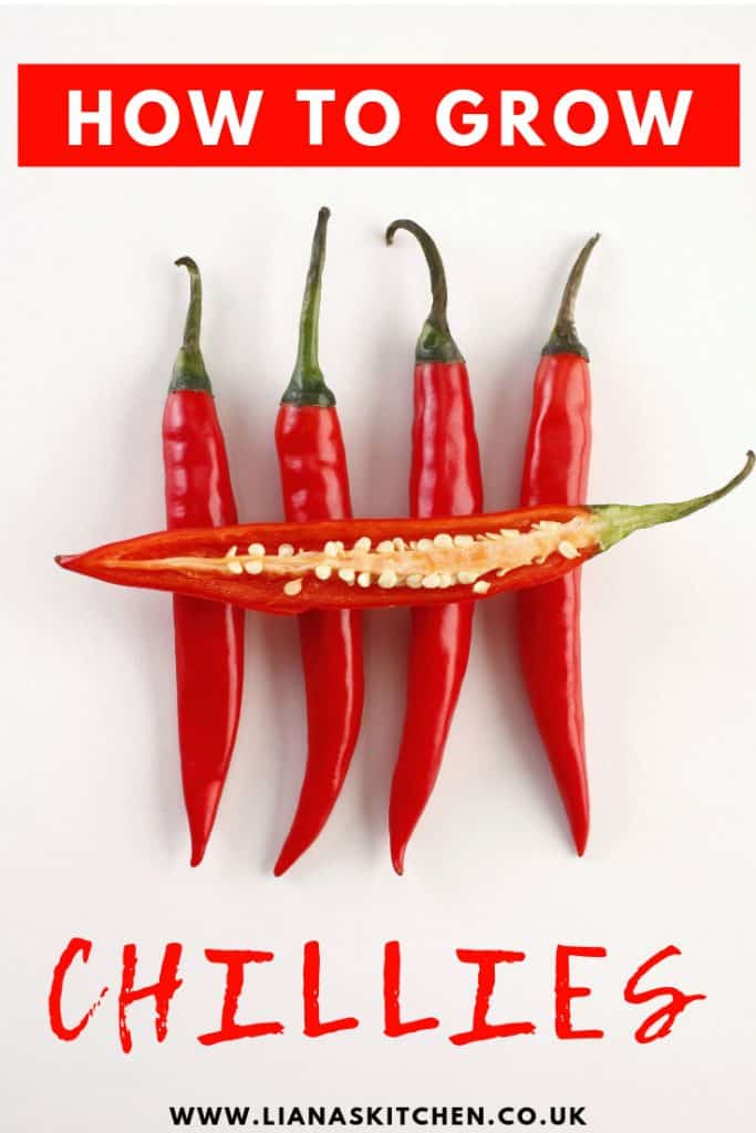 How To Grow Chillies At Home