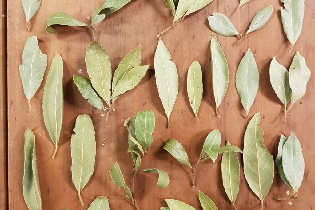bay leaves drying out on chopping board