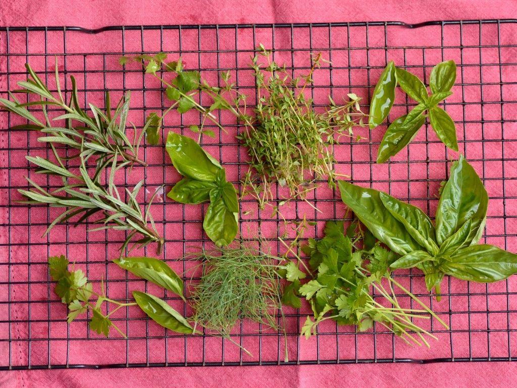 air dry herbs the natural way