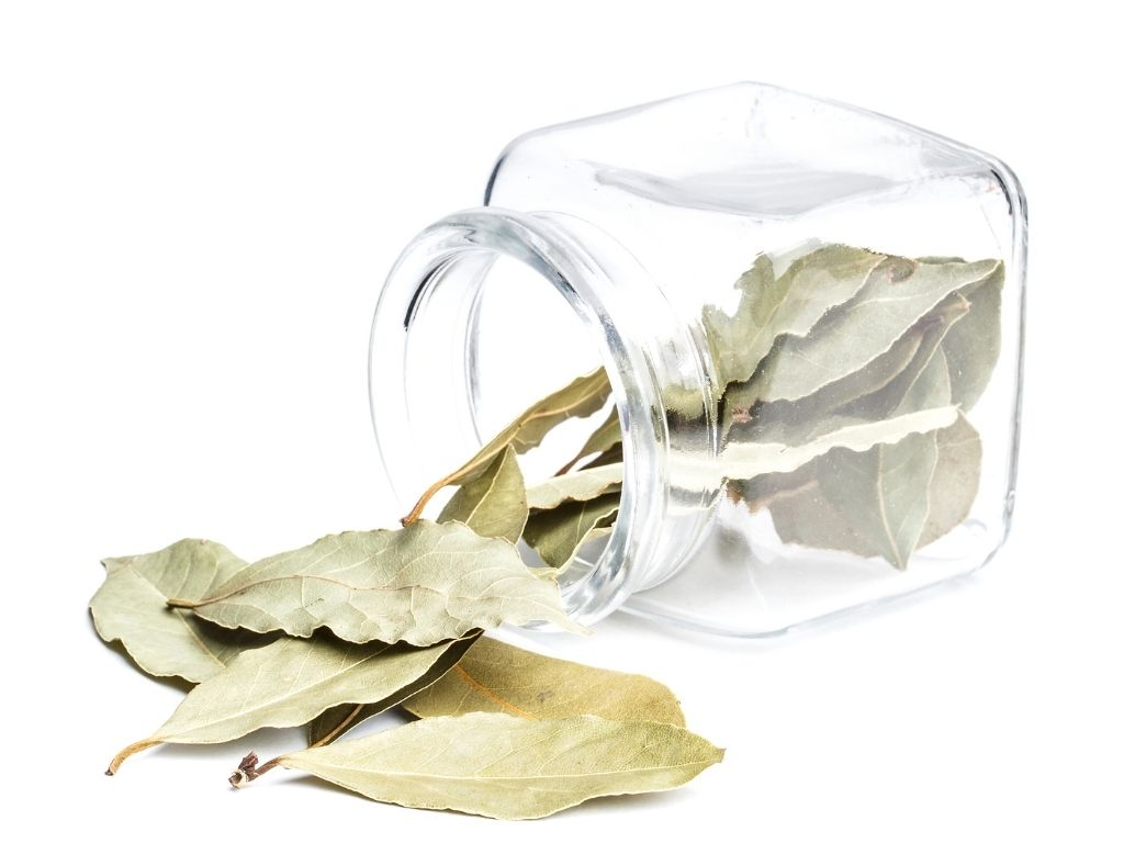 storing bay leaves
