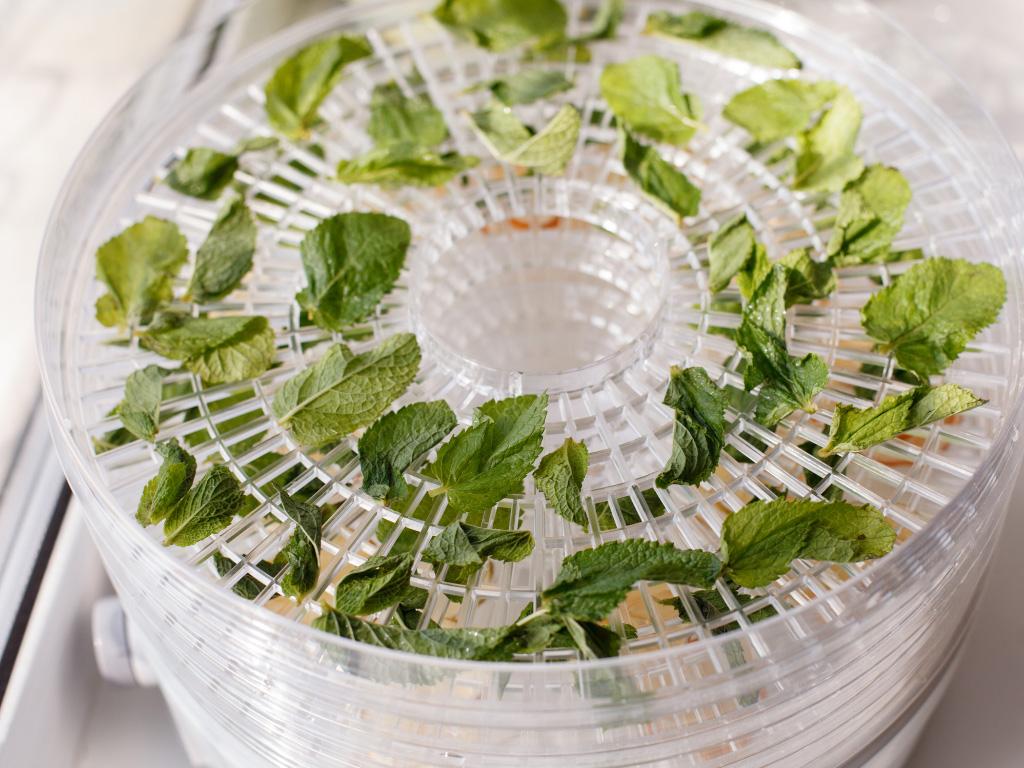 dehydrating mint leaves
