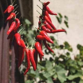 how to dry chillies in the sun